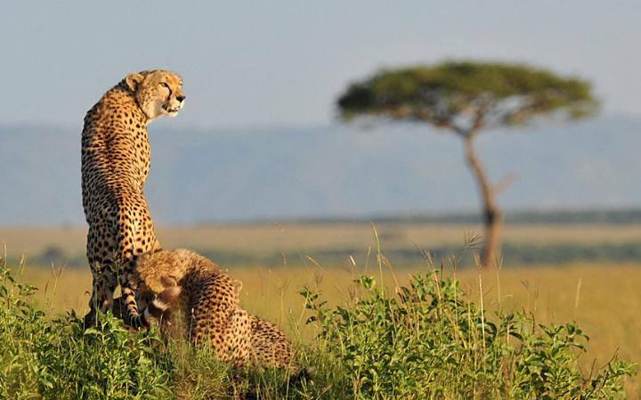 safari to Tarangire national park